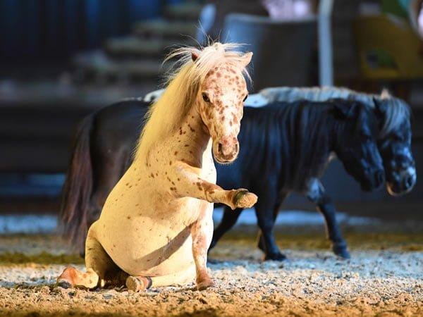 Cavalluna Rusticana